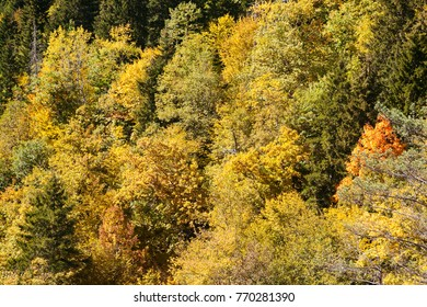 view from top of yellow trees in the fall