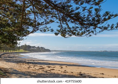 View of Torquay surf beach promenade along Norfolk Pine trees on foreshore in Victoria, Australia