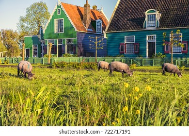 View of Traditional Dutch Village with Ships in Zaanse Schans, Holland, The Netherlands. Horizontal Shot