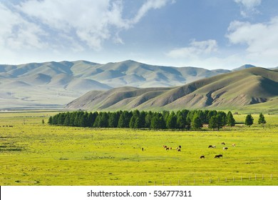 A view from the Trans-Siberian train at Ulaanbaatar , Mongolia