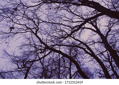 View of tree branches against a gloomy sky
