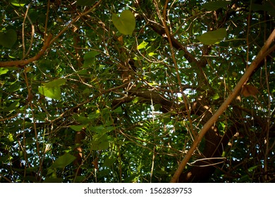 View of the tree with branches and leaves covering wide area and providing shade from sun