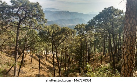 View of Tree and hills in Kasauli, India