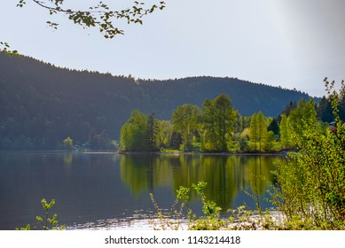 View of tree line and lake shore in Salt Spring island during summer time, British Columbia, Canada