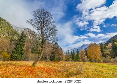 View to tree near snow covered colorful foothills of caucasus mountains in autumn, Arkhyz, Karachay-Cherkessia, Russia
