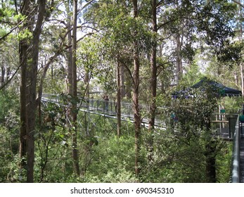 View of a tree top walkway in the Valley of the Giants, Western Australia, disappearing off in to the forest