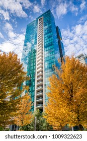 View of trees in autumn gold and urban office buildings West End of Downtown, Vancouver, British Columbia, Canada, North America 12 September 2017