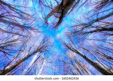 view of trees from below surreal forest