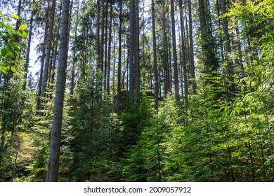 view of trees in a densely wooded forest on a clear day