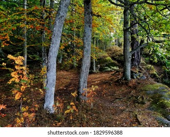 A view of trees in the forest during a sunny day in Larvik, Norway