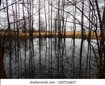 View of trees growing next to small pond on cloudy autumn day. Masuria, Poland