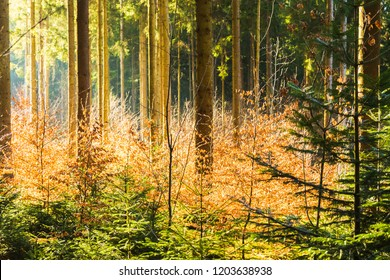 View of trees from inside a forest