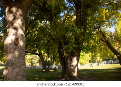 View of trees in a park with white fence in the background on a clear autumn day