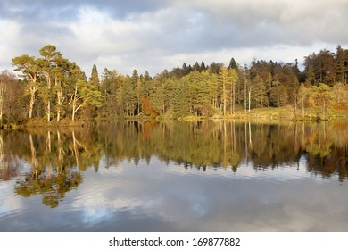 View of trees showing autumn colour reflected in water in evening light at Tarn Howes, Coniston, Lake District, Cumbria, England.
