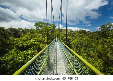 View of the TreeTop Walk, the highlight of several long hiking routes in MacRitchie Reservoir Park in Singapore.