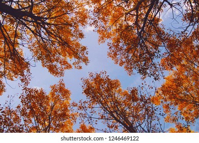 View of the treetops in autumn from the ground