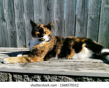 View of tricolor cat with closed eyes