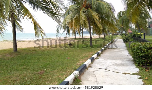 view of tropical beach with coconut palm trees. low light