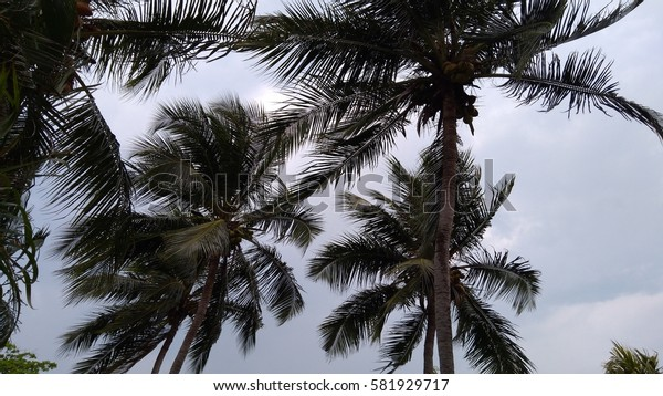 view of tropical beach with coconut palm trees. low light . selective focus