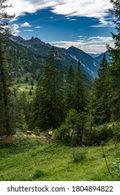 the view trough the great valley of Walser with spruce, fir and ash pines on the mountain slopes and the Breithorn in the background. the cloudy sky makes a interesting scenery with lights an shadows