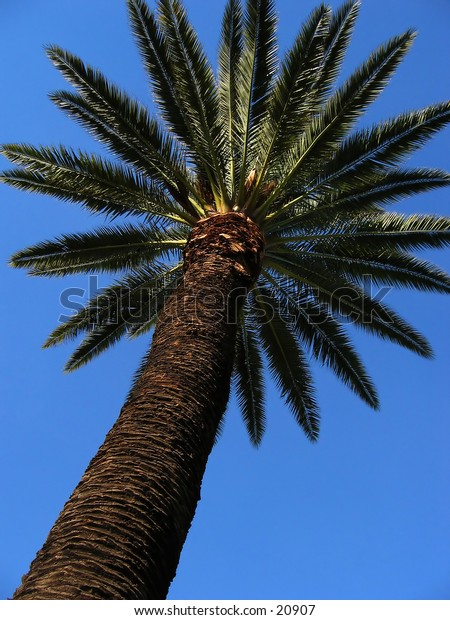 View of the trunk and leaves of a palm tree with a clear blue sky.