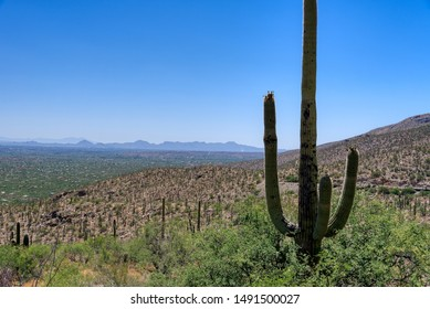 View of Tucson, Arizona from Mt Lemmon Scenic Byway with a saguaro cactus in the foreground