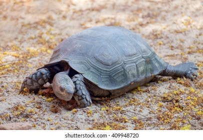 View of turtle walking on the sand.