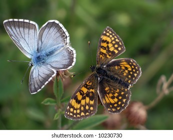 View of two different butterflies laying close together