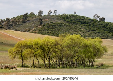 View  of the typical Alentejo countryside landscape with sparse tree clusters in Portugal.
