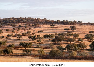 View of the typical dry landscape of Alentejo region located in Portugal.