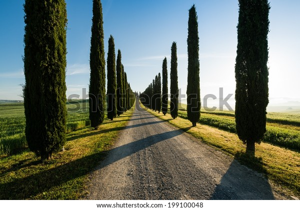 View of typical road in Tuscany