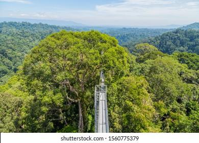 Vue du parc national Ulu Temburong ou du parc fathul, dans le district de Temburong, à l'est du Brunei, depuis la promenade à baldaquin