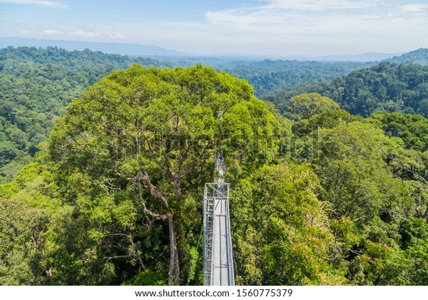 View of Ulu Temburong National Park or fathul park, in Temburong District in eastern Brunei from canopy walkway