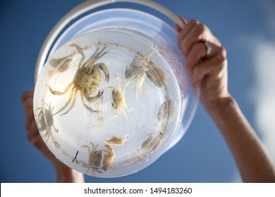 A view from underneath a clear bucket, full of shore crabs on a sunny day.