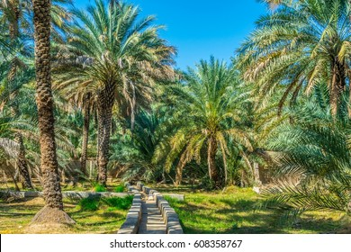 View of the unesco enlisted oasis in Al Ain, UAE