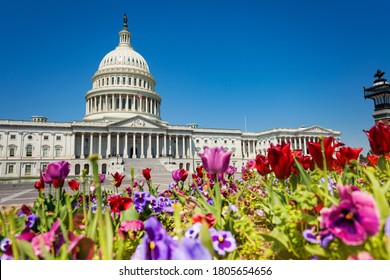 View of The United States Capitol Building home of the USA Congress through colorful flowers in Washington, D.C.