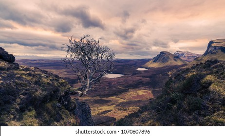 View of the valley with dramatic sky and lonely bush on the rock in the foreground. Scotland, Isle of Skye, Quiraing.