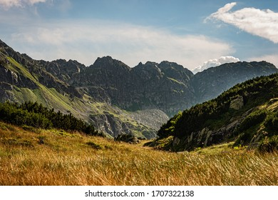 View of the valley in the Tatra Mountains, in the foreground a meadow with yellow-green grass, mountain pine growing around