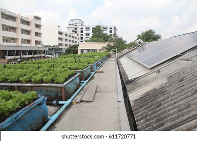 View of vegetable on the roof