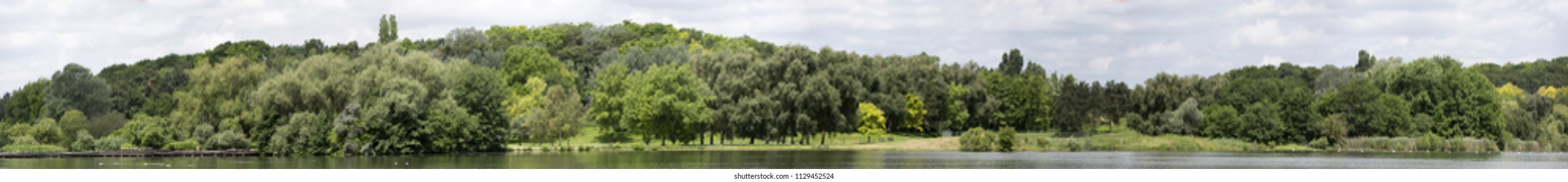 View of a Very high definition Treeline with a colorful blue sky