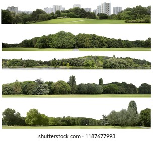 View of a Very high definition Treeline isolaeted on a white background