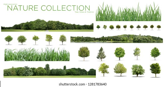View of a Very high definition Treeline, grass and tree collection isolated on a white background