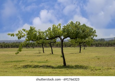 view of a vineyard with a blue sky background