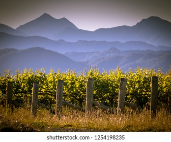 View of vineyard and misty mountains background at sunset in Marlborough region New Zealand
