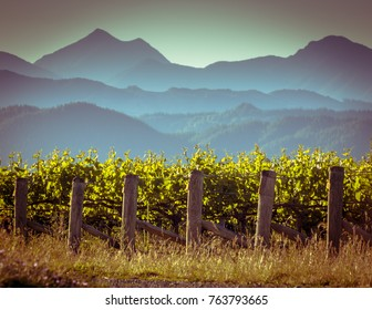 View of vineyard with misty mountains background at sunset in Marlborough region New Zealand