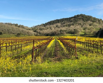 View of a vineyard in Napa Valley