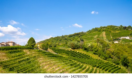 View of vineyard Prosecco on the small town of Rolle, Valdobbiadene , Veneto, Italy