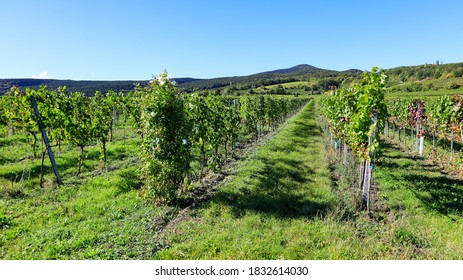 A view to the vineyard in Soss (between Baden und Bad Voeslau), a popular excursion place for hiking and vining, mid October.  - Shutterstock ID 1832614030