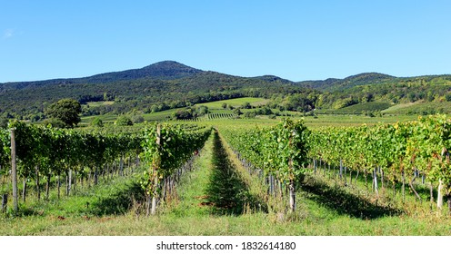 A view to the vineyard in Soss (between Baden und Bad Voeslau),   with hills in the background, a popular excursion place for hiking and vining, mid October.  - Shutterstock ID 1832614180