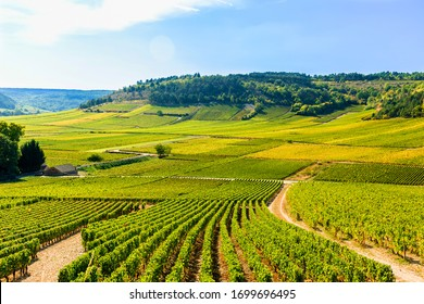 View of vineyards, in Burgundy, France
